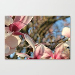 *Insert flowery title here* Canvas Print