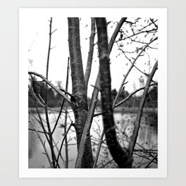 Lakeside nature Art Print