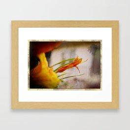 Dawn Lily Framed Art Print