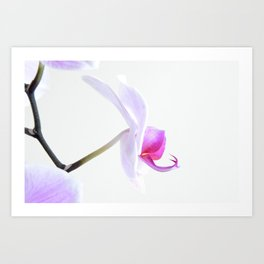 Orchid One -side view Art Print