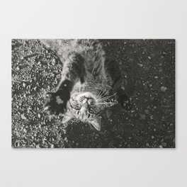 Cat Paws and Plays Canvas Print
