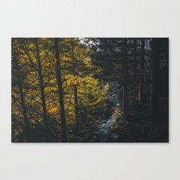 Landscape photo - forest in autumn Canvas Print