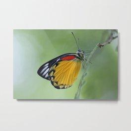 Butterfly.. Metal Print