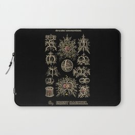 """Stephoidea"" from ""Art Forms of Nature"" by Ernst Haeckel Laptop Sleeve"