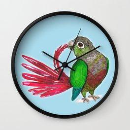 Preening green cheek conure Wall Clock