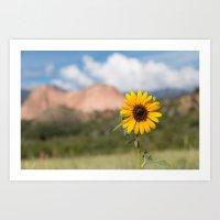 Sunflower in the Garden of the Gods Art Print