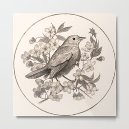 Nigtingale sitting on a bench of blossoming sakura tree Metal Print
