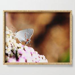 Gray Hairstreak Butterfly Serving Tray