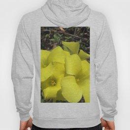Yellow clover flowers Hoody