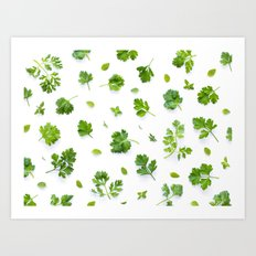 Herbs on White - Landscape Art Print