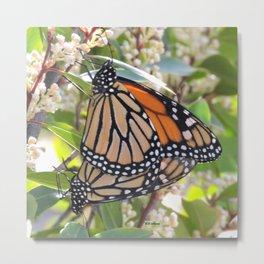Monarch Mating Metal Print