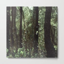 Magical forest atmosphere Metal Print