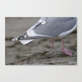 Half of a Seagull Canvas Print