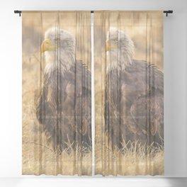 Bald Eagle Sheer Curtain