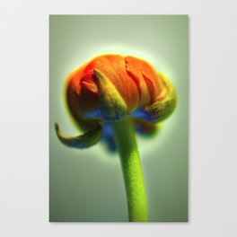 Orange Bud Canvas Print