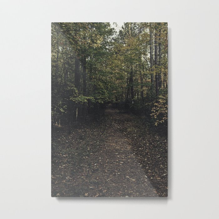 Forest 002 Metal Print