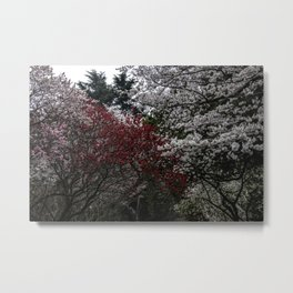 Japanese spring blossom in reds and pinks Metal Print