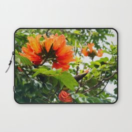 The beautiful red flowers of the African Tulip Tree Laptop Sleeve