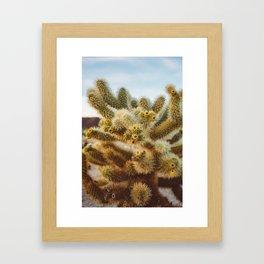 Cholla Cactus Garden IV Framed Art Print