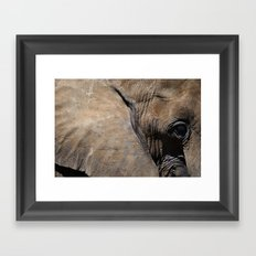Elephant Portrait - Side Framed Art Print