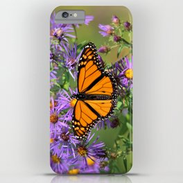 Monarch Butterfly on Wild Aster Flower iPhone Case