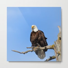 Patiently Waiting! Metal Print