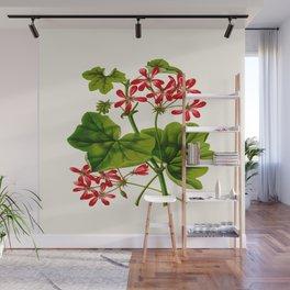 Joy Leaved Geranium Vintage Scientific Botanical Flower Illustration Hand Drawn Art Wall Mural