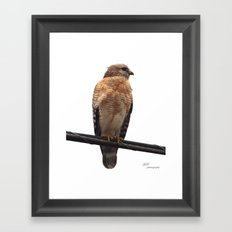 Falcon Wire Framed Art Print