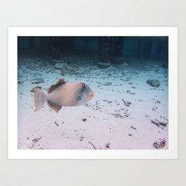 Maldives Wildlife Coral Fish In Turquoise sea Art Print