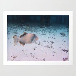 Maldives Wildlife Coral Fish In Turquoise sea Art Print
