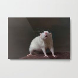Millie the Rat Metal Print