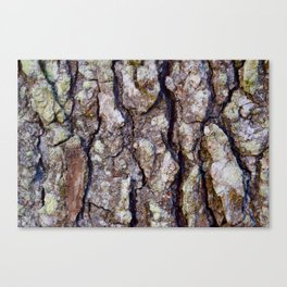 Woodsy Feeling Canvas Print
