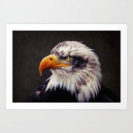 Bald Eagle Art Print