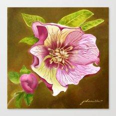 Lenten Rose Canvas Print