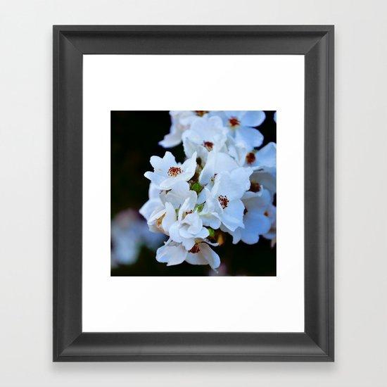 Snow Cherry Framed Art Print