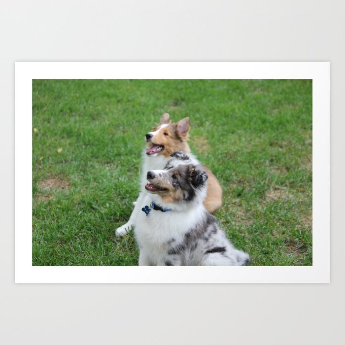 Sheltie Puppies Art Print By Lauraludwighamor Society6