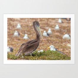 Pelican among the Gulls Art Print