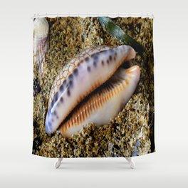 gastropod cowry shell mollusc Shower Curtain