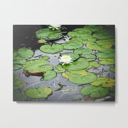 Lilypad Pond Landscape Nature Photography Metal Print