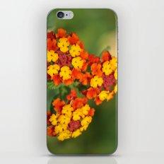 Italian Bloom iPhone & iPod Skin