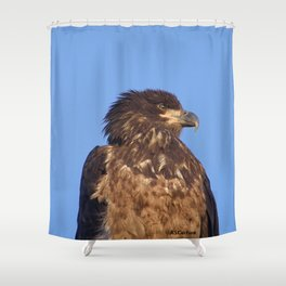 Golden Eagle on the Kenai Shower Curtain