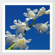 white hyacinth I Art Print
