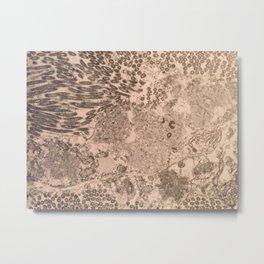 itchy series: no. 2 Metal Print