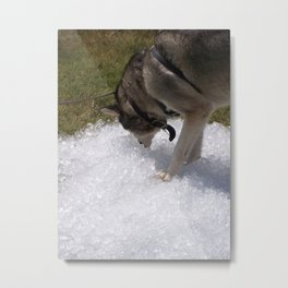 Cold as Ice Metal Print