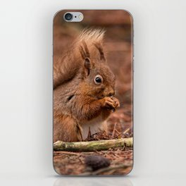 Nature woodland animals Red squirrel by a log iPhone Skin