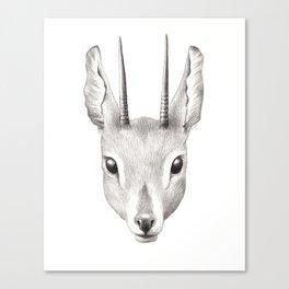 Antelope Canvas Print