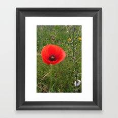 Tall Poppy Framed Art Print