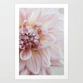 Blush Pink Dahlia, No. 1 Art Print