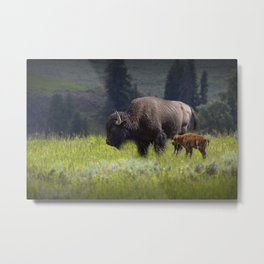 American Buffalo Bison Mother and Calf in Yellowstone National Park Metal Print