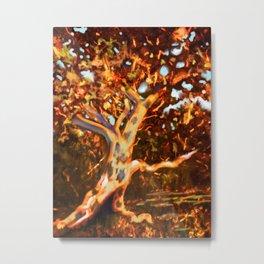 Fall Sycamore Metal Print